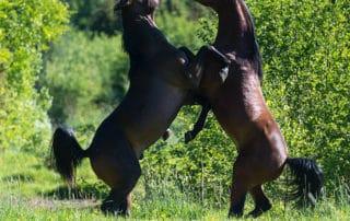 Ypäjä, hevoset,, horses.