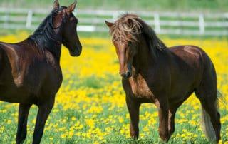 Ypäjä, hevoset, horses.