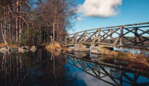 liesjärvi_nationalparks