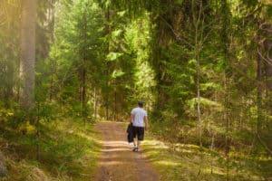 Aulanko_forest