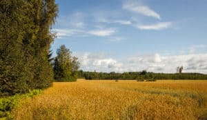 Härkätie_ox_road_field_pelto