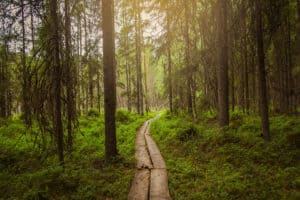 Evo_pitkospuut_metsässä_duckboard_in_a_forest