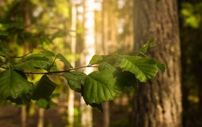 metsä_oksa_luonto_forest_nature