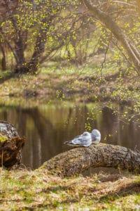 Kevät_herää_linnut_puut_hiirenkorvalla_lähimatkailu_häme