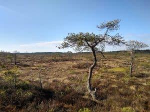 Torronsuon_kansallispuisto_maisema_suomaisema_suo