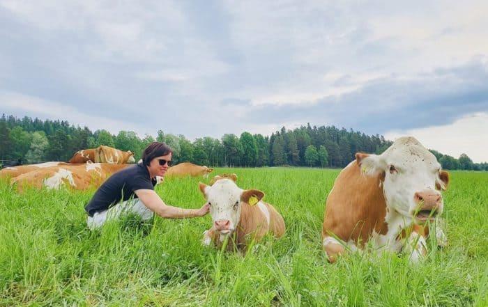 Ruokamatkalla_Hämeessä_Karita_ja_lehmät_laitumella