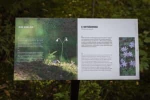 Sibeliuksen_metsa_hameenlinna_luontopolku