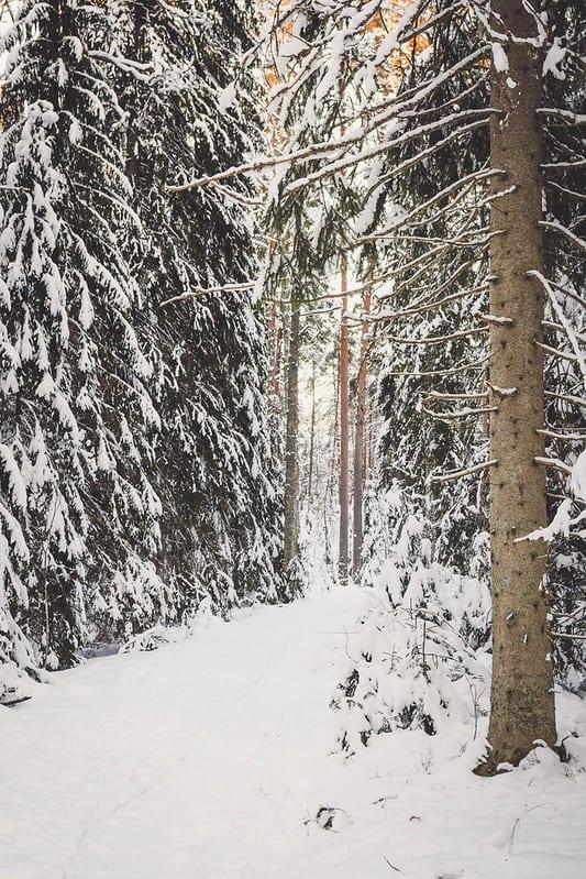 Talviaktiviteetit_Aulanko_Puistometsa_reitti_metsassa