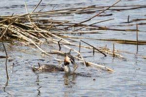 Jokamiehenoikeudet-muista-kunnioittaa-luontoa-ja-elaimia-seka-lintujen-pesimaaikaa