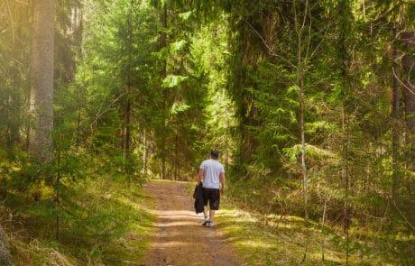 Aulanko-Aulangon-puistometsa-kavelytie-metsassa