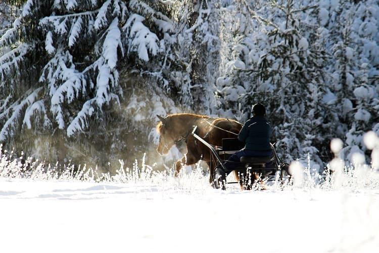 Suomenhevonen_ratsastus_hevonen_ja_ratsastaja_lumella