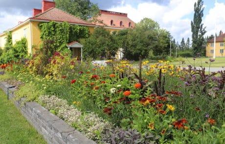 Lepaa-Lepaan-viinitila-ja-puutarhaopisto-kukat