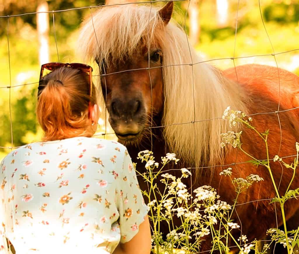 nuori nainen syöttää ponille ruohoa