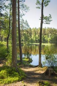 Kaunis luonto Eerikkilässä Tammelassa