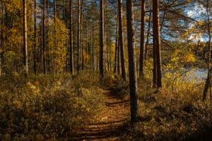Roskaton_luonto_metsä